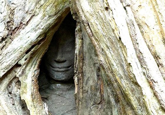Scoperta-campagna-Cambogia